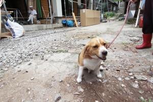 2014-7-25 犬2