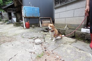 2014-7-25 犬